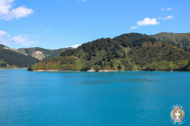 Frühlingsfarben auf der Südinsel von Neuseeland