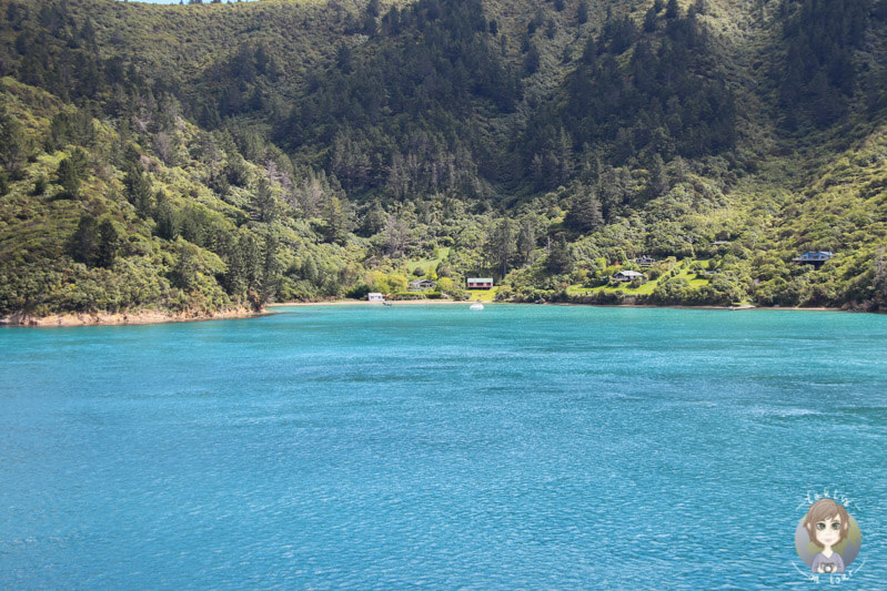 Kleine Buchten mit vereinzelten Häusern auf Arapawa Island, Neuseelands Südinsel