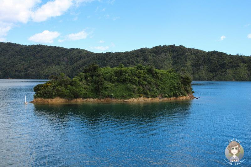 Blick von der Interislander auf eine kleine vorgelagerte Insel kurz vor Picton