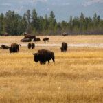 Wyoming – wild, weit und wunderschön