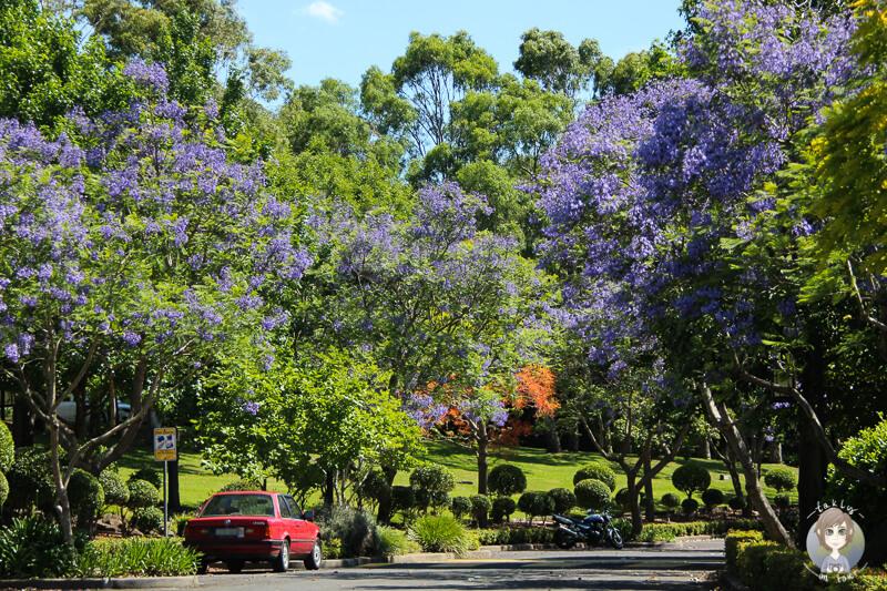 Frühling in Berkeley