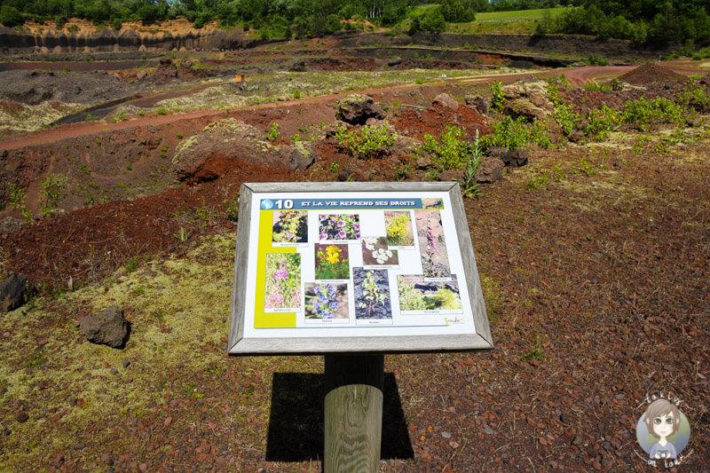Infotafel im Volcan de Lemptegy Museum