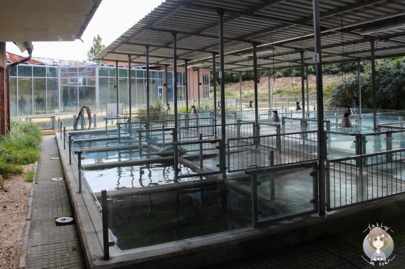 Die Aufzuchtbecken für Seehunde