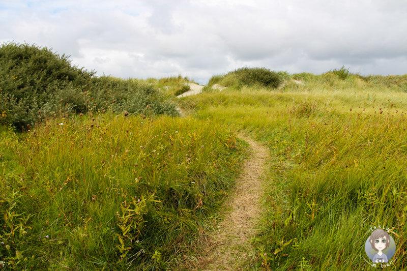 Ein Weg führt durch die Dünen zum Strand, Norddeich