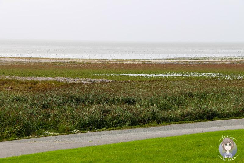 Das Vogelschutzgebiet an der Nordsee in Campen