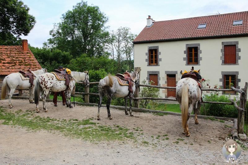 Die Pferde auf der Ranch O´Palles in Charbonnières-les-Vieilles, Frankreich