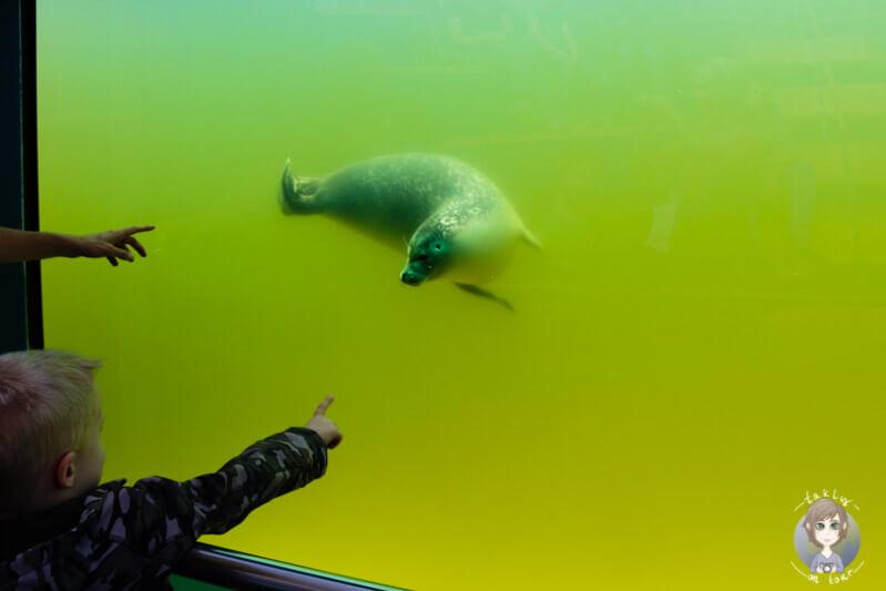 Die Seehunde lassen Kinderaugen strahlen