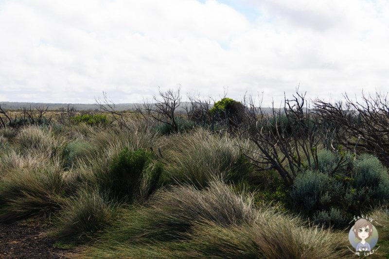 Die weite Graslandschaft entlang der Great Ocean Road in Australien