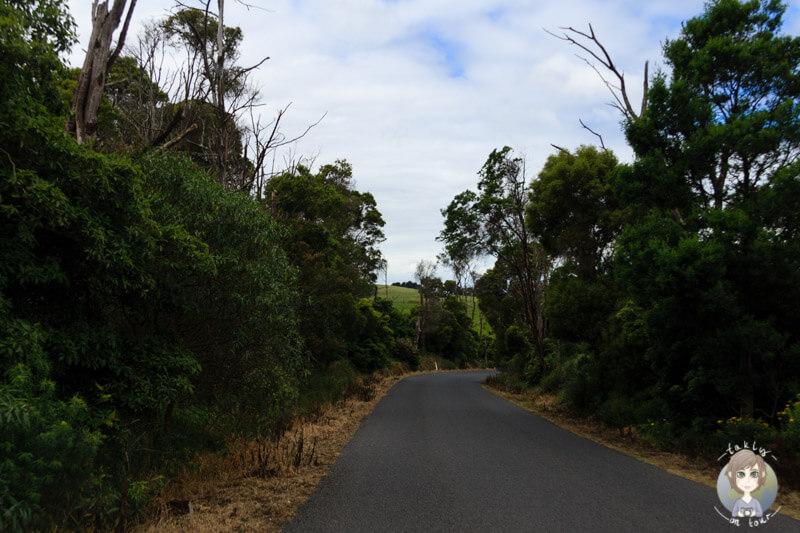 Agnes Falls Road, Toora, Victoria, Australien