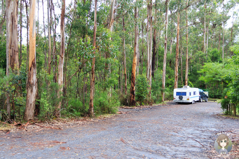 Camping in der Thurra River Rest Area, New South Wales