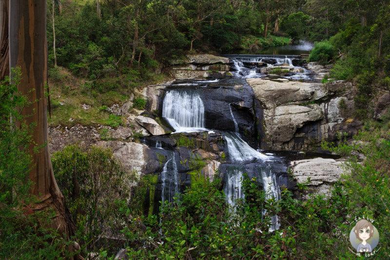 Die Agnes Falls, Hazel Park in Victoria, Australien