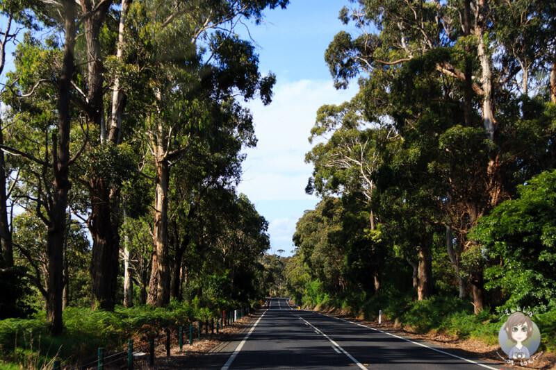 Fahrt über den Princes Hwy, Victoria
