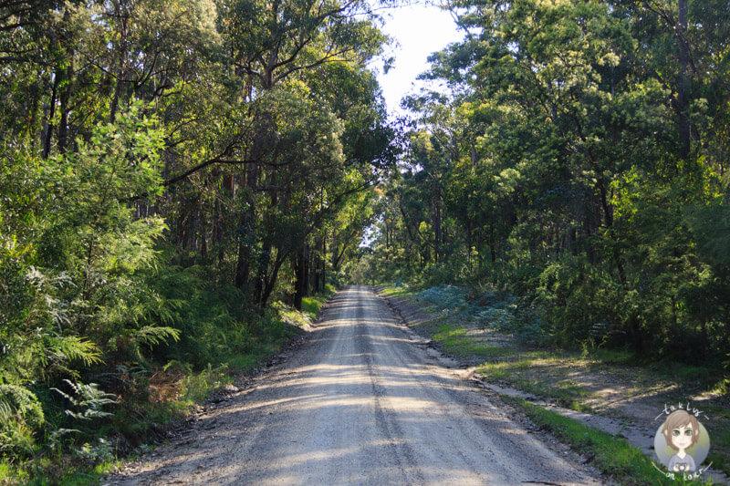 Lake Tyers State Park, Victoria, Australien