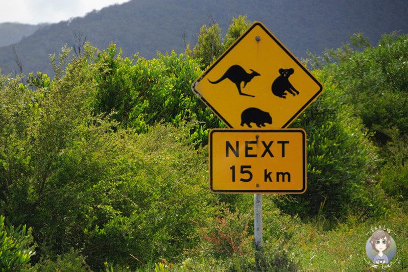 Vorsicht Wildlife im Wilsons Promontory National Park, Victoria, Australien
