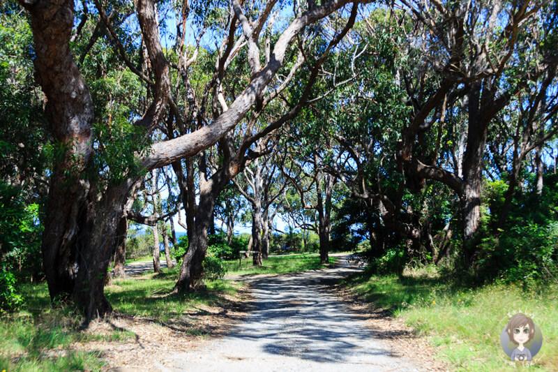 Anfahrt Michael Lerner Lookout, NSW, Australien