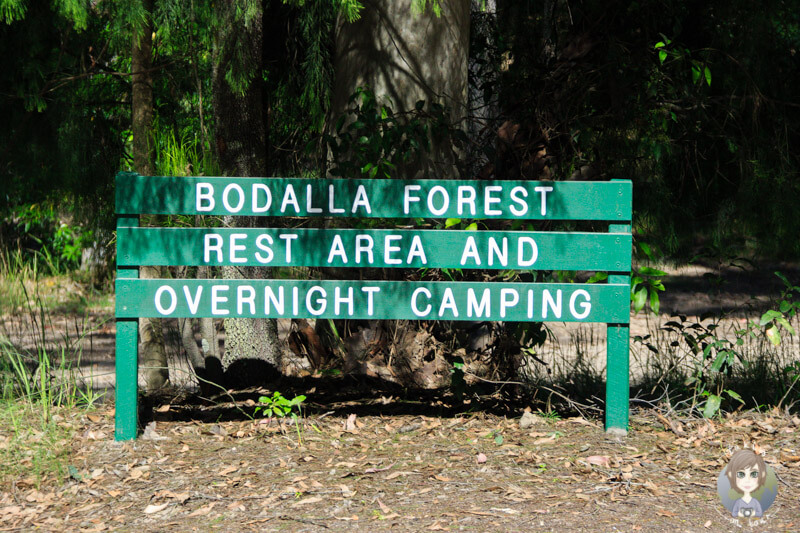 Bodalla Forest Park Camping, NSW