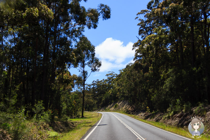 Princes Highway in NSW