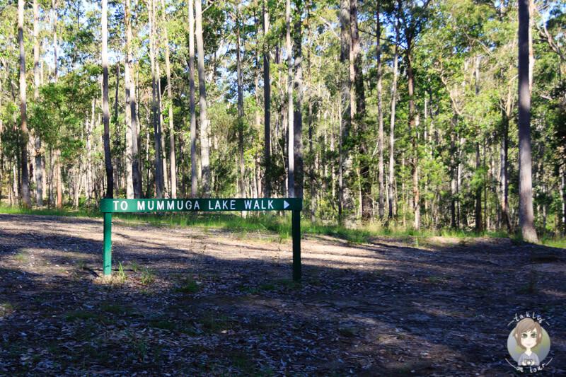 Walk von der Bodalla Forest Restarea, NSW