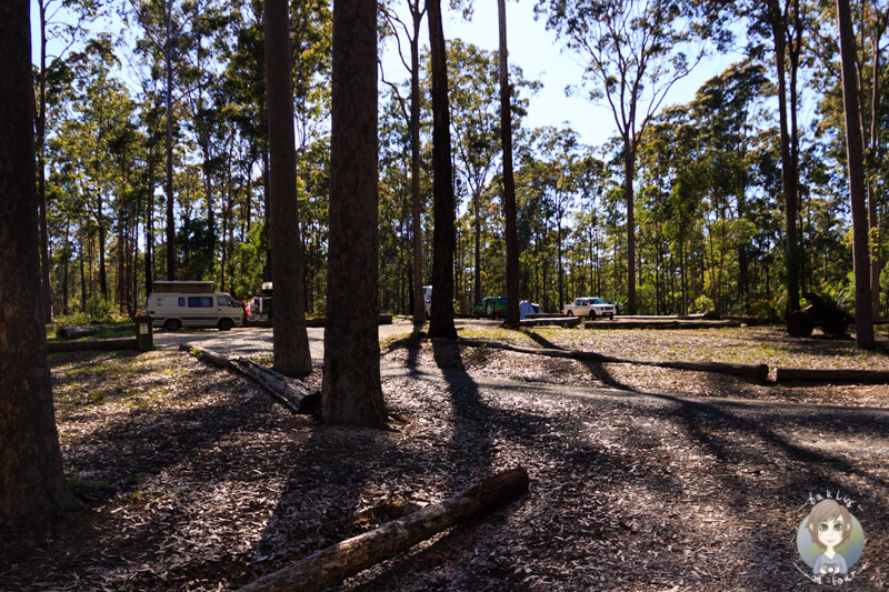 Wunderschöner Campingplatz, die Bodalla Forest Rest Area in NSW