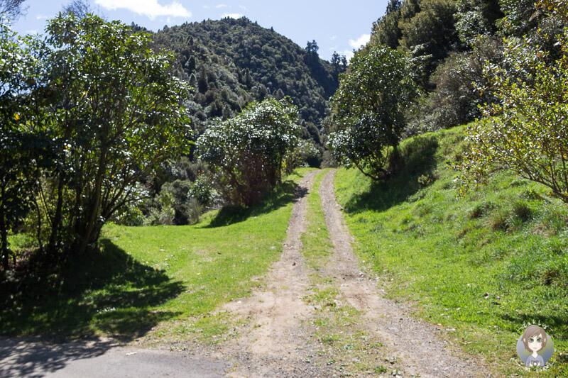 Anfahrt zum Manganuku DOC, Neuseeland