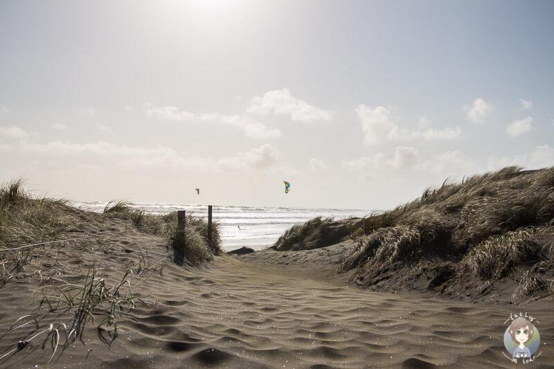 Dünen zum Muriwai Beach, Neuseeland
