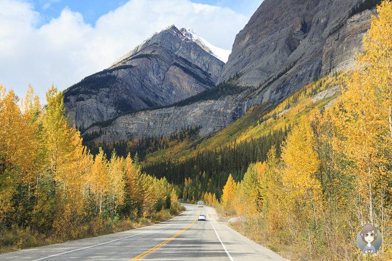 Im Herbst unterwegs auf dem Icefields Parkway