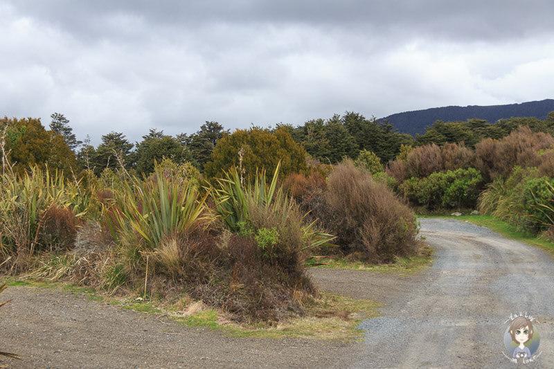 Mangahuia DOC Campground
