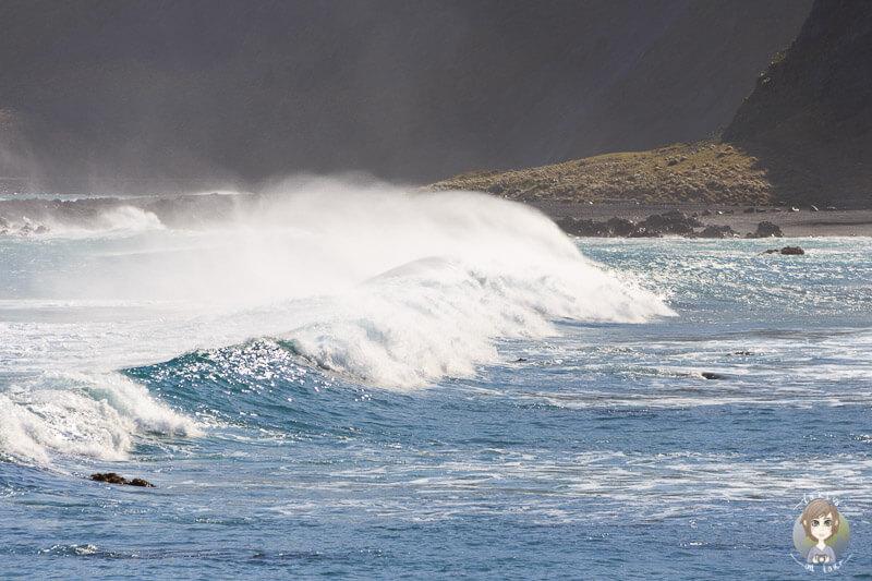 Teils hohe Wellen an Wellingtons Küste