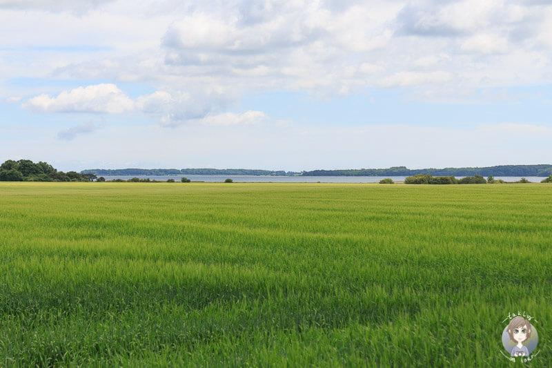 Blick auf die See in Dänemark