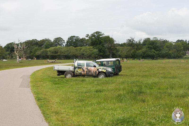 Sicherheit im Knuthenborg Safaripark