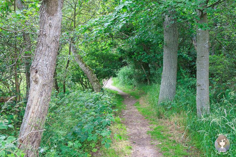 Weg durch den Wald zu den Dodekalitten in Krageæs, Lolland