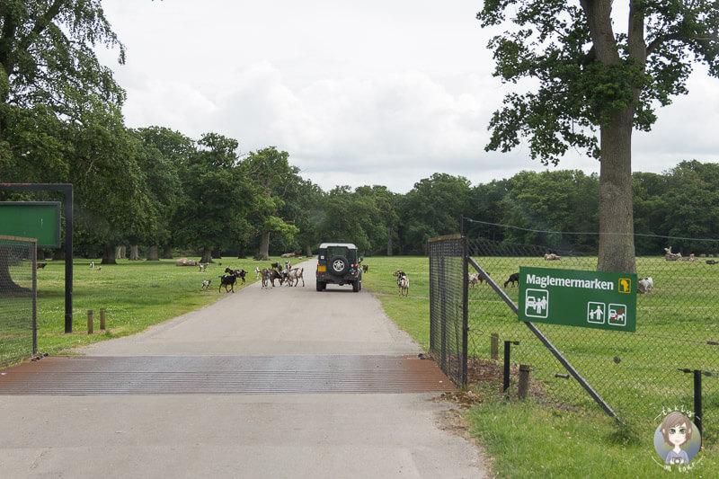 Ziegen im Safaripark