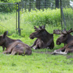 Knuthenlund und Knuthenborg • Tierische Erlebnisse in Lolland