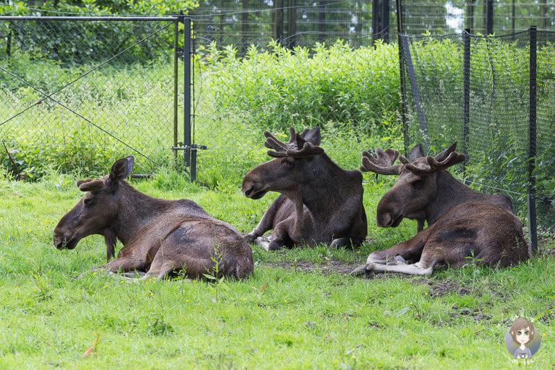 Zu Besuch im Knuthenborg Safaripark in Daenemark