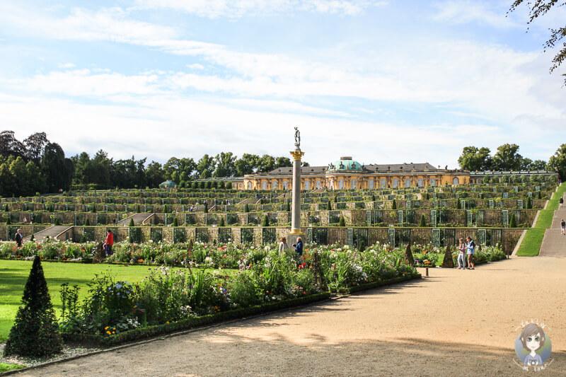Das Schloss Sanssouci mit seinen Weinbergterrassen