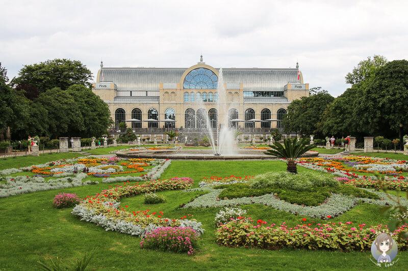 Die blühende Flora in Köln