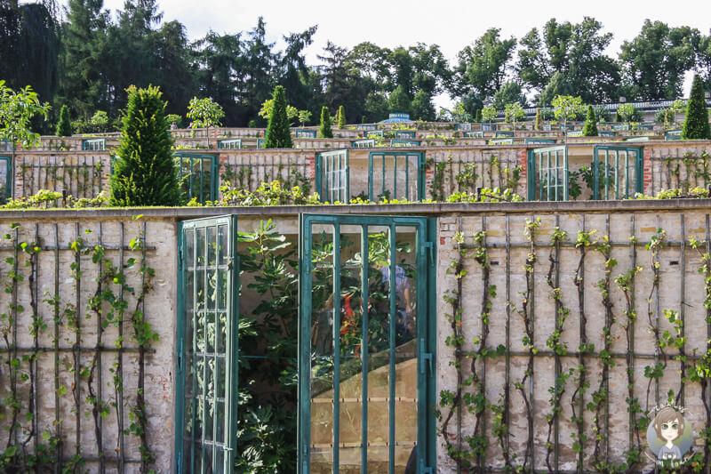 Die Weinbergterrassen im Schlosspark Sanssouci, Potsdam