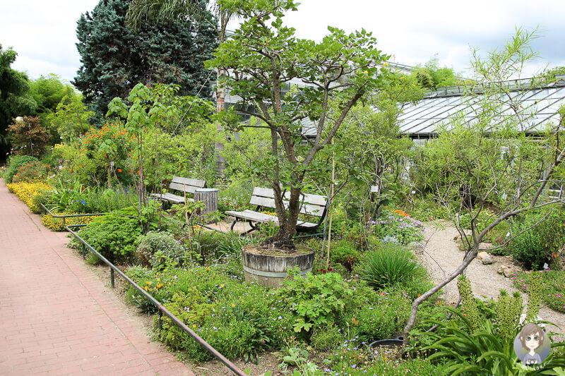 Die Flora in Köln ist ein Traum für Botanikfans