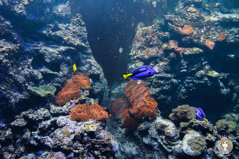 Zauberhafte Unterwasserwelt im Klimahaus Bremerhaven