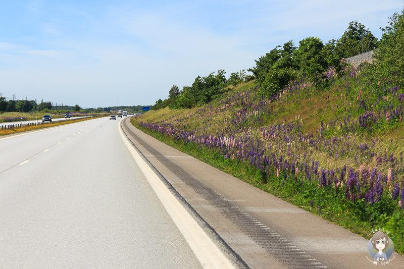 Fahrt über die E6 entlang Schwedens Westküste