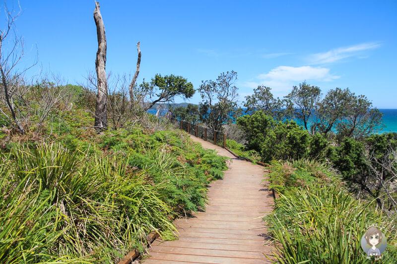 Weg zum Viewpoint Cave Beach, Booderee National Park, NSW