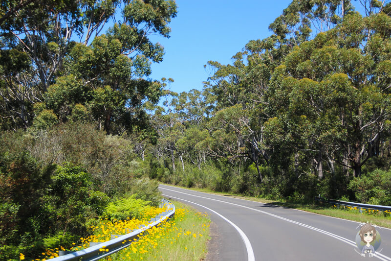 Fahrt durch den Booderee National Park, NSW, Australien