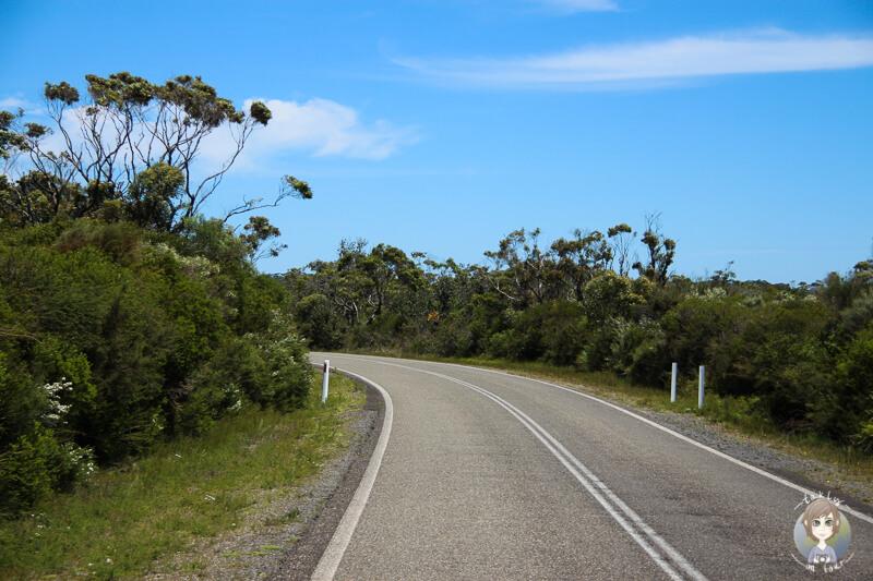 Fahrt durch den Booderee-Nationalpark Richtung Botanic Gardens