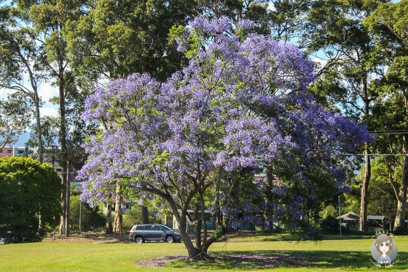 Frühling in Australien