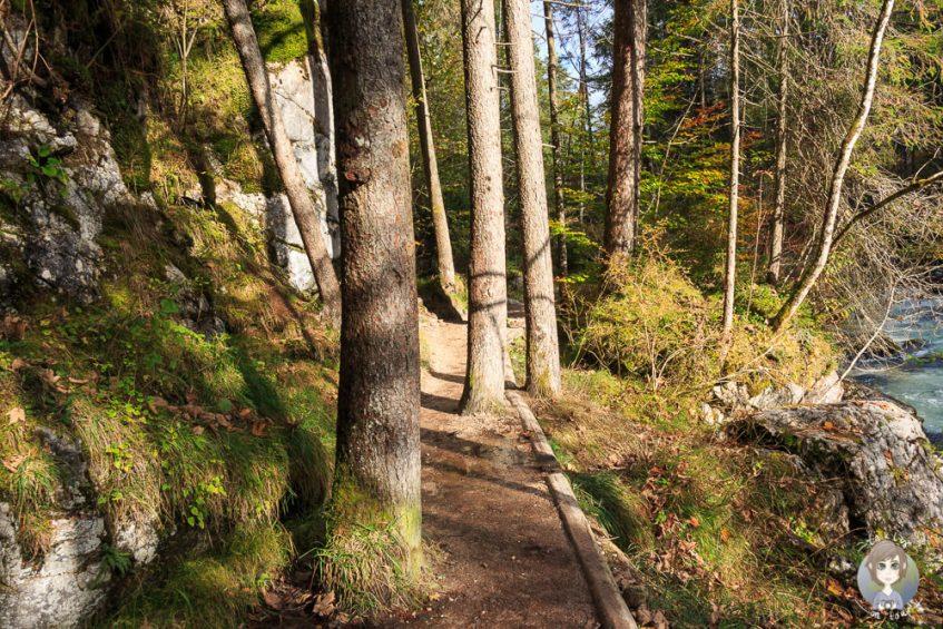 Naturlehrpfad Zauberwald