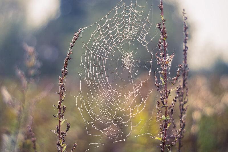 Spinnennetz ohne Spinne