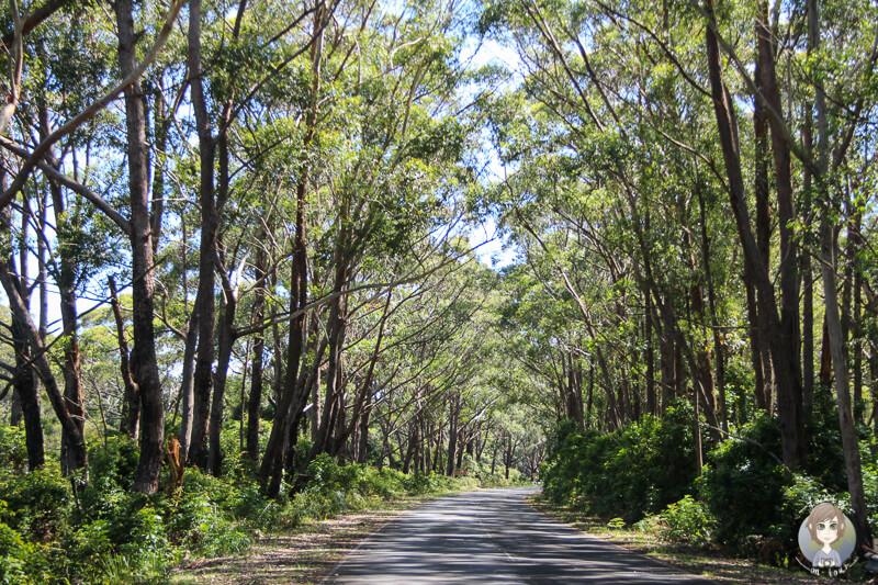Auf dem Weg durch den Nationalpark Booderee, NSW