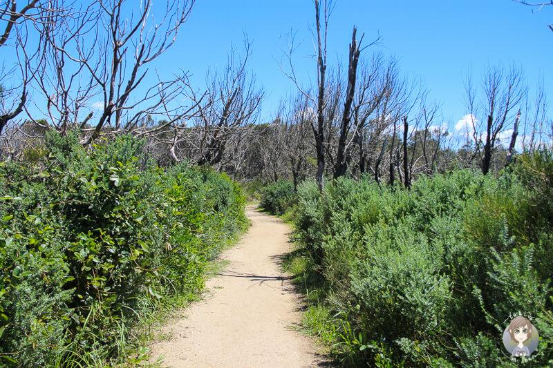 Netter Wanderweg am Warden Head, NSW