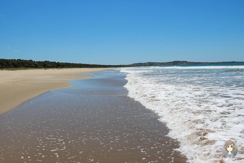 Am Meer im Seven Mile Beach Nationalpark, NSW