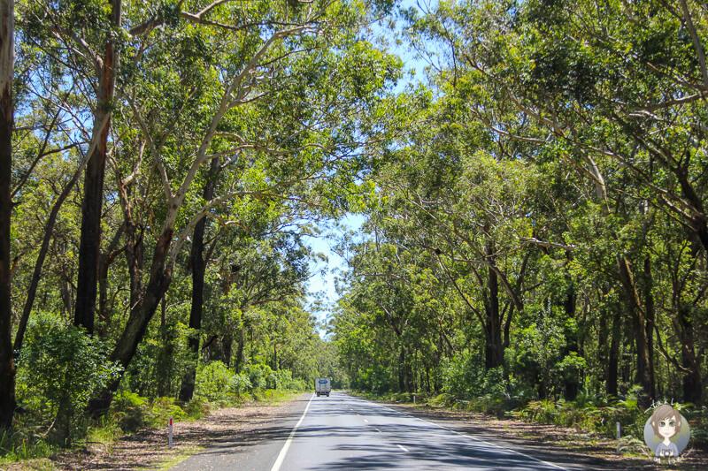 Fahrt durch den Seven Mile Beach National Park, NSW, Australien